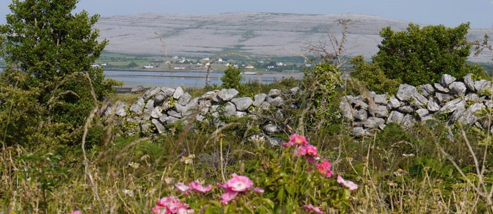 Home swap in Co. Clare