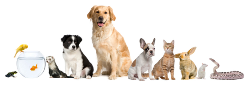 Pet care during a home swap